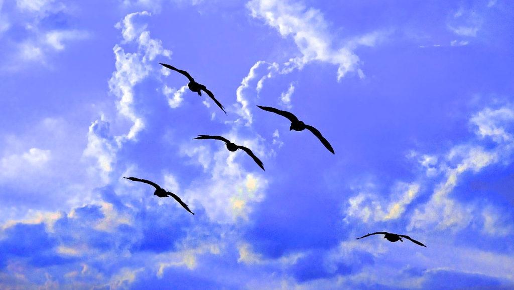 Birds in flt